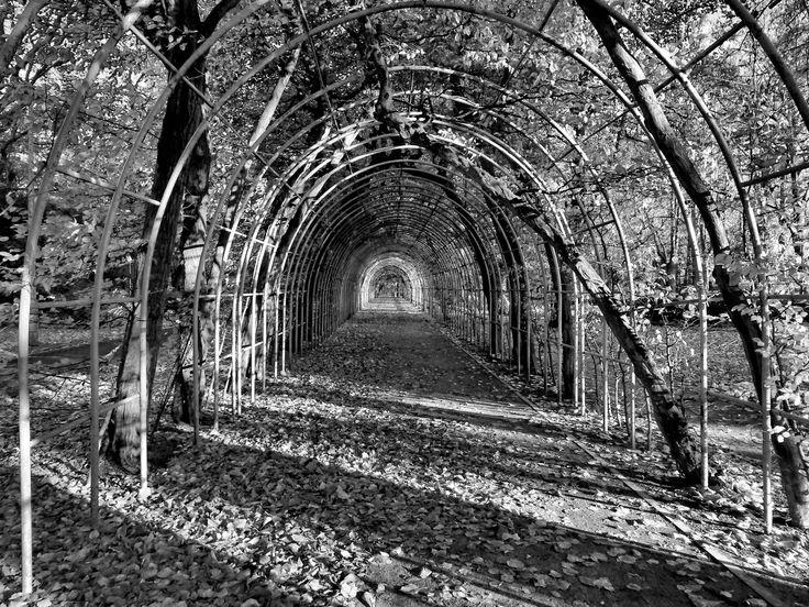 Bindaż, berso, chłodnik czy kolebka to element architektury ogrodowej znany już od czasów renesansu. W Kołobrzegu jest ozdobą Parku Koncertów Porannych przy ul. Towarowej. I jest to prawdziwa perełka, ponieważ bindaż jest niezwykle rzadkim obecnie elementem założeń parkowych w Polsce. Kołobrzeski bindaż został założony w połowie XIX wieku. Photo by GB.  #architektura, #Kolobrzeg, #Kolberg #bindaż