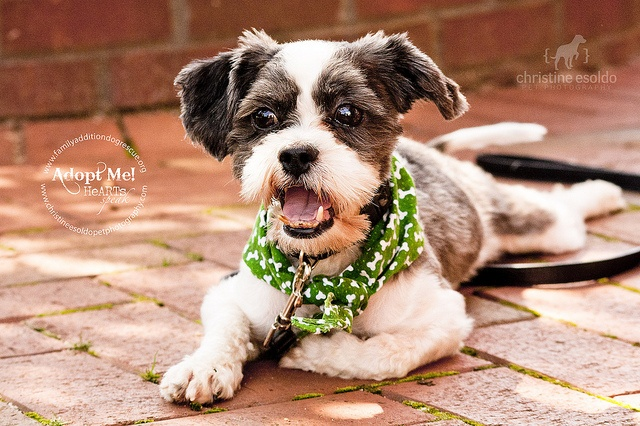 Family Addition Dog Rescue Petfinder