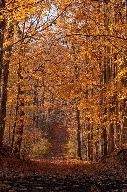 This beautiful golden trail is an invitation to explore the crispness of a cool fall day with  crunchy leaves beneath your feet and the refreshing joy of being in the woods. http://www.janetcampbell.ca/