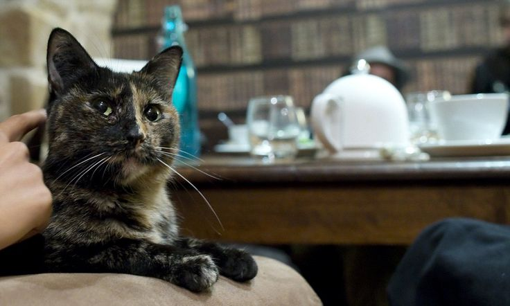 Café des Chats in Paris has 12 resident cats adopted from rescue shelters