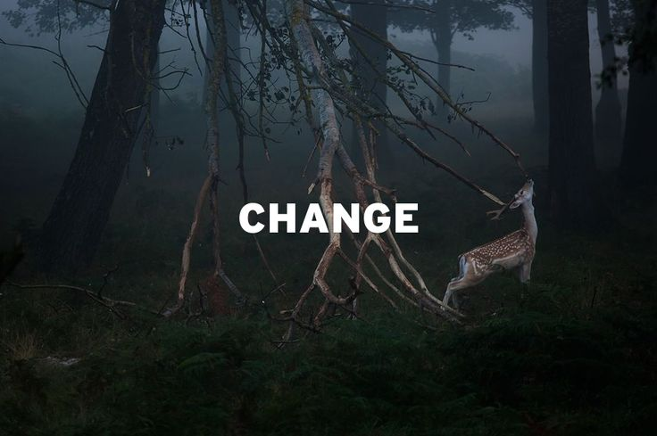 """""""CHANGE is not something that we should fear. Rather, it is something that we should welcome. For without change, nothing in this world would ever grow or blossom, and no one in this world would ever move forward to become the person they're meant to be.""""  B. K. S. Iyengar / Photo  by Szymon Bakota."""