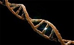 """Blogging the Human Genome: Muscular dystrophy, Cri du Chat, """"immigration delay disease""""—When DNA fails. - Slate Magazine"""