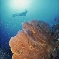Diving in Costa d'Argento, Maremma, Tuscany, Italy