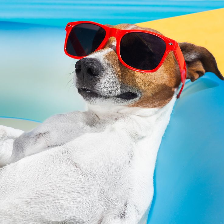 Wir wünschen Euch allen ein entspanntes Wochenende! Bin dann mal am Strand... bis Montag ☀️  #fashion #style #stylish #shopping #luxury #lifestyle #duxiana #bett #dux #bed #beautiful #instagood #fun #love #amazing #smile #look #instalike #igers #picoftheday #dogbed #dogstyle #dogpic