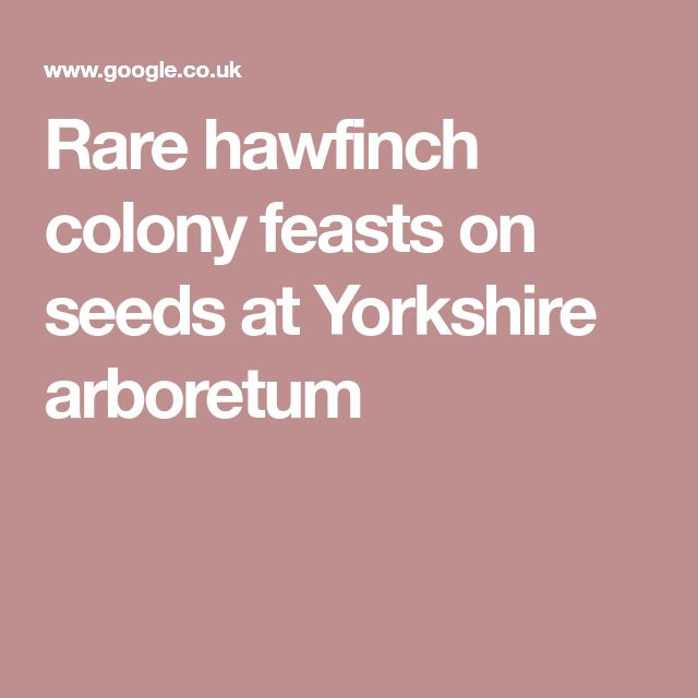 Rare hawfinch colony feasts on seeds at Yorkshire arboretum