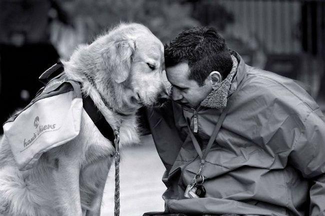 Cani il segreto della felicità.