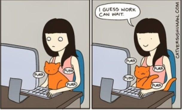 Interesting Comics To Illustrate Daily Life With A Cat