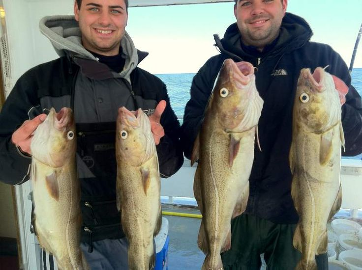 17 best images about cod on pinterest fishing charters for Bank fishing near me