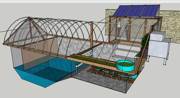 212 melhores imagens sobre plantas e horta no pinterest for Ecosystem pool