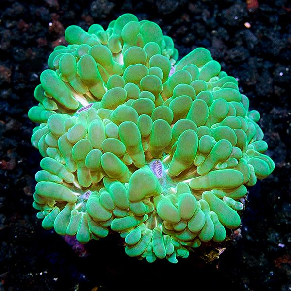 Pin On Corals And Fish
