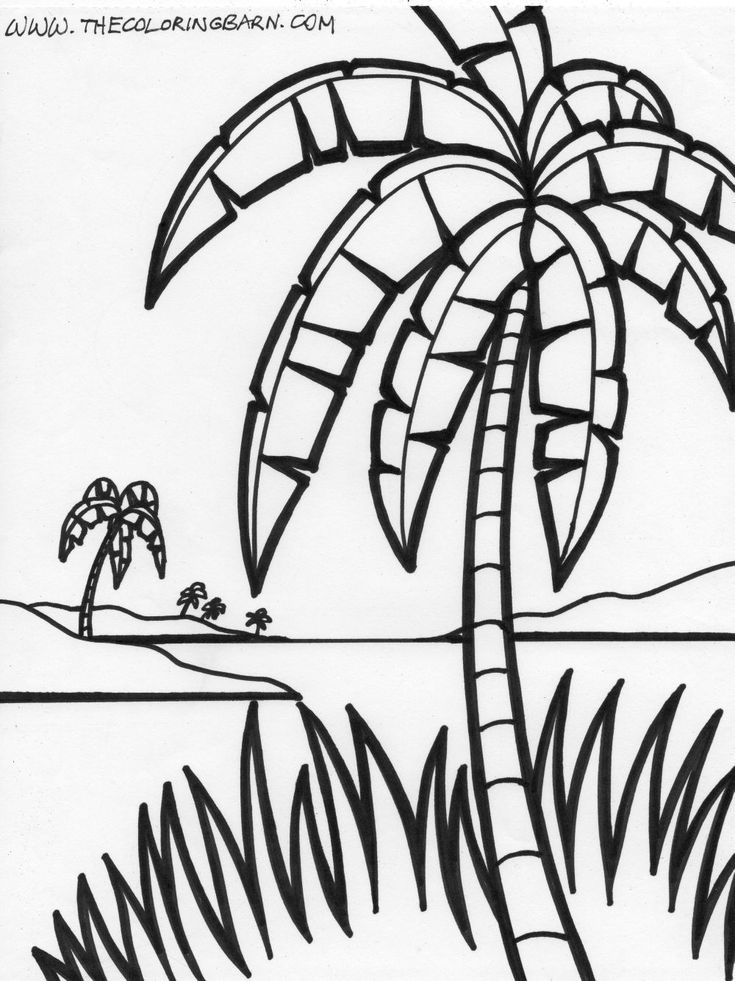 palm tree growing green - Palm Tree Coloring Pages Print