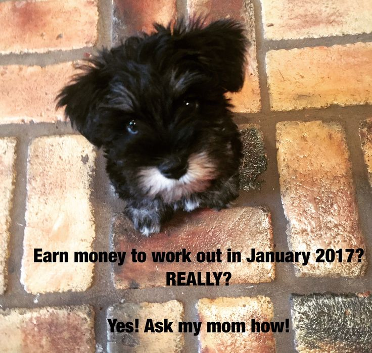 Get Paid to Workout in January 2017? Yes, it is TRUE!