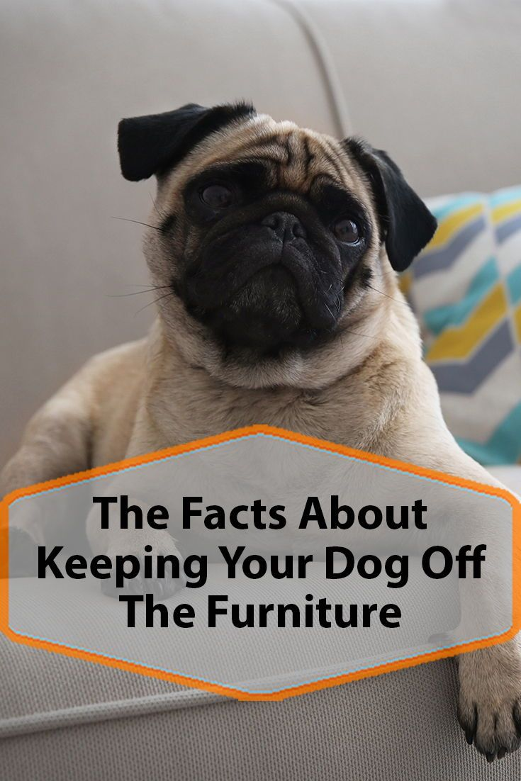 How To Keep Your Dog Off The Furniture Dog Training Guard Dog