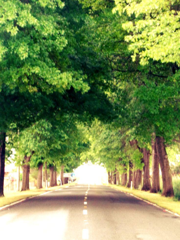 New England Highway.  Tenterfield, NSW.    #startthedaywithsomethingbeautiful