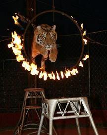 Владивостокский государственный цирк