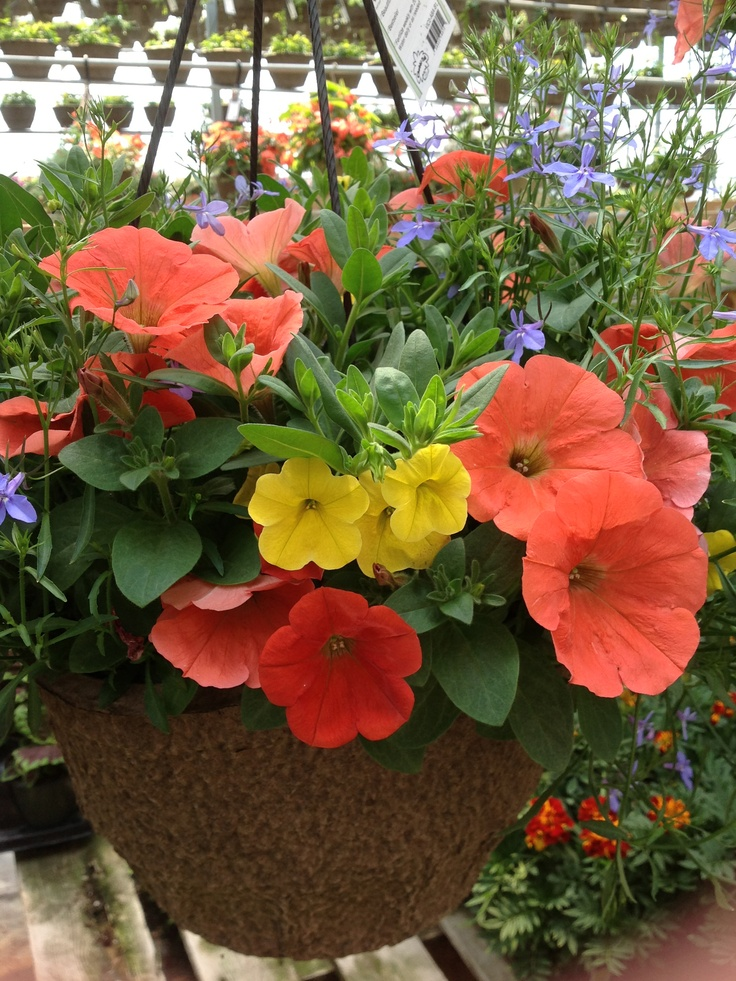 Victorian Hanging Flower Baskets : Images about beautiful victorian hanging baskets on