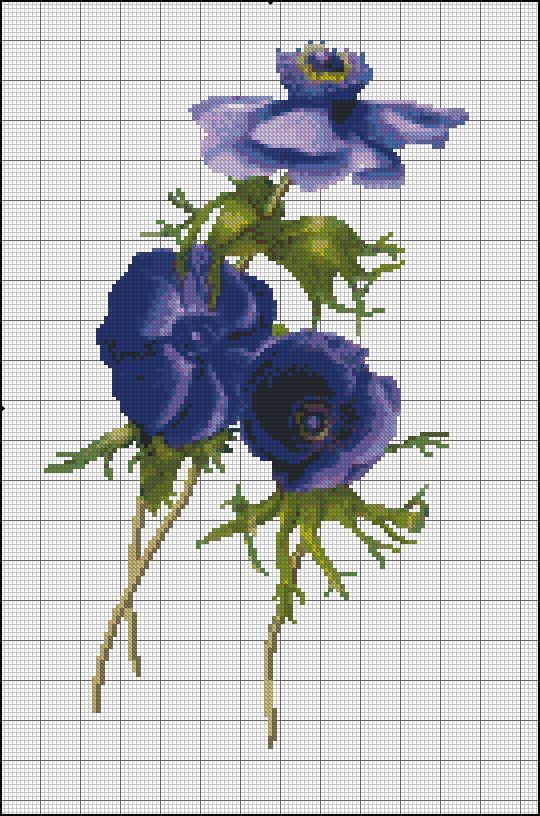 blue anemone1