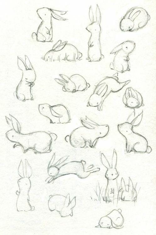 Rabbits!!!*