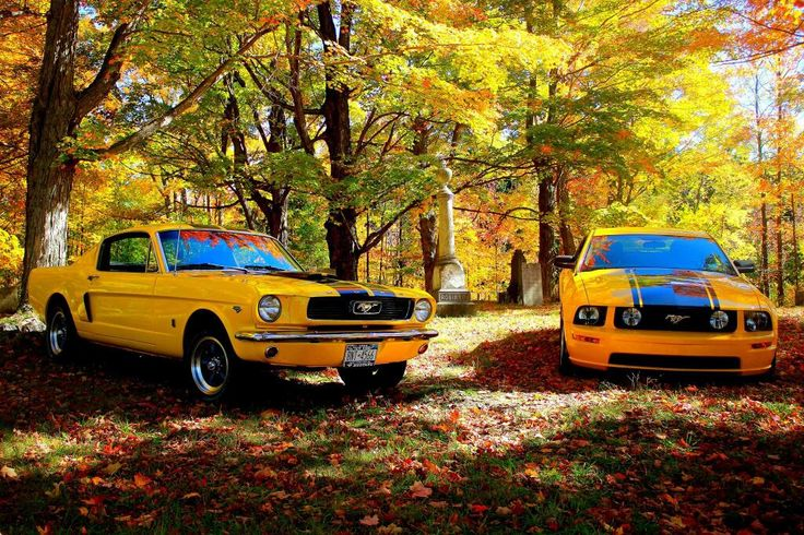 1966 Mustang GT and 2006 Mustang GT