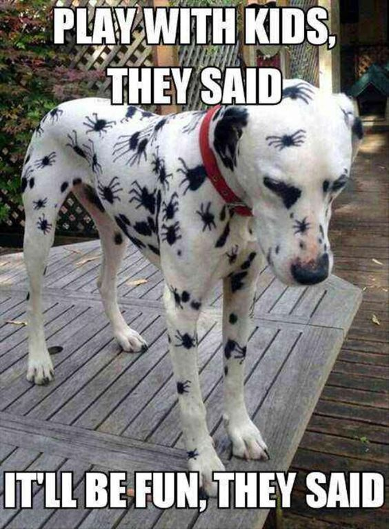 Best Funniest Animals Ideas On Pinterest Hilarious Animal - The 39 funniest animal photobombs of all time