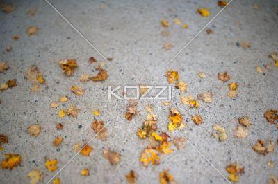 autumn leave on ground. - Image of autumn leave on ground.