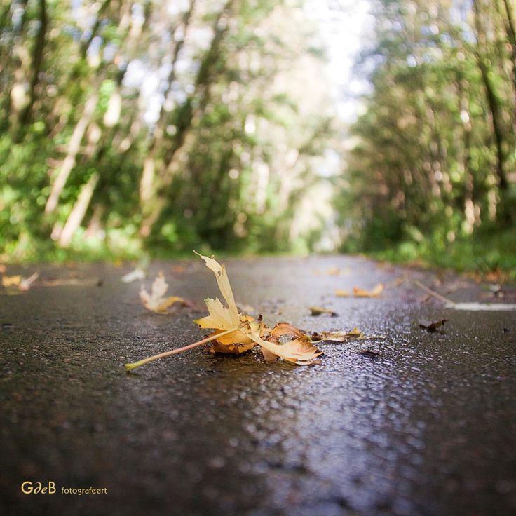 autumn time | herfst tijd