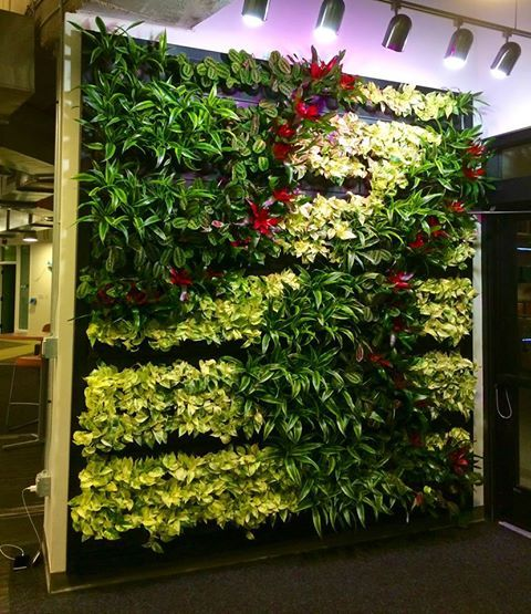 There's no better way to revamp your office space than with a green wall.