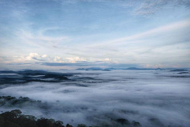 Taman Nasional Tanjung Puting - mencakup tiga Kabupaten: Kotawaringin Barat, Lamandau dan Seruyan - merupakan rumah bagi sekitar 6,000 Orangutan