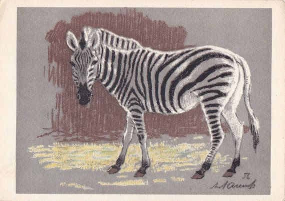 Postcard Drawing by Laptev Zebra  1963 by RussianSoulVintage