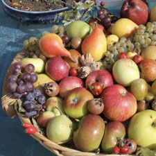 Antique fruit varieties - Locanda della Valle Nuova  - Urbino - Le Marche - Green holiday accommodation  www.vallenuova.it