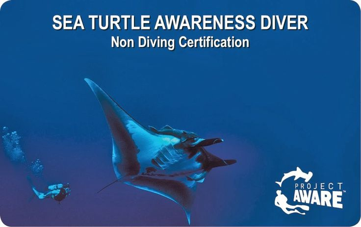 Red Sea Turtle Project: e-Learning  Become a PADI Sea Turtle Awareness Diver. It's very easy and everyone can do it! If you are a diver, your certification will count towards your PADI Master Scuba Diver program.