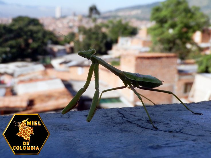 Gracias por confiar en Miel de Colombia  pedidos: 3012020777 - 3117402833  ventas@mieldecolombia.com www.mieldecolombia.com Servicio a domicilio sin ningún costo en el area metropolitana http://mielcolombia.blogspot.com/