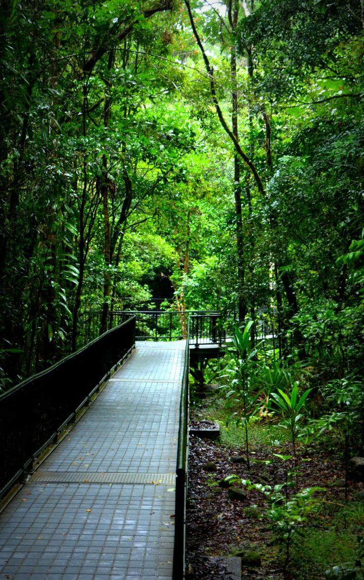 Daintree Rainforest, Australia.