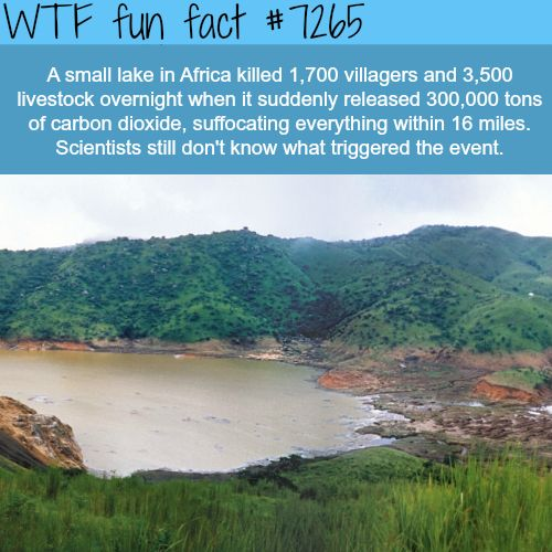 Lake in Africa that killed a whole village and all animals around it - WTF fun fact