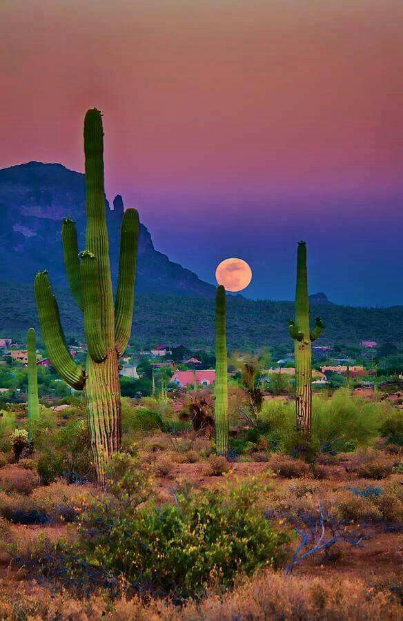 """My most """"fav""""picture of Arizona!❤❤❤❤❤❤"""