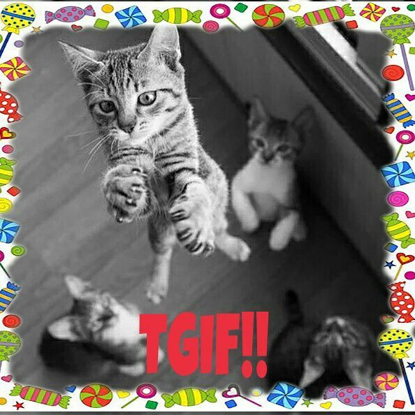 Tis The Day! #cat #candycat #tgif