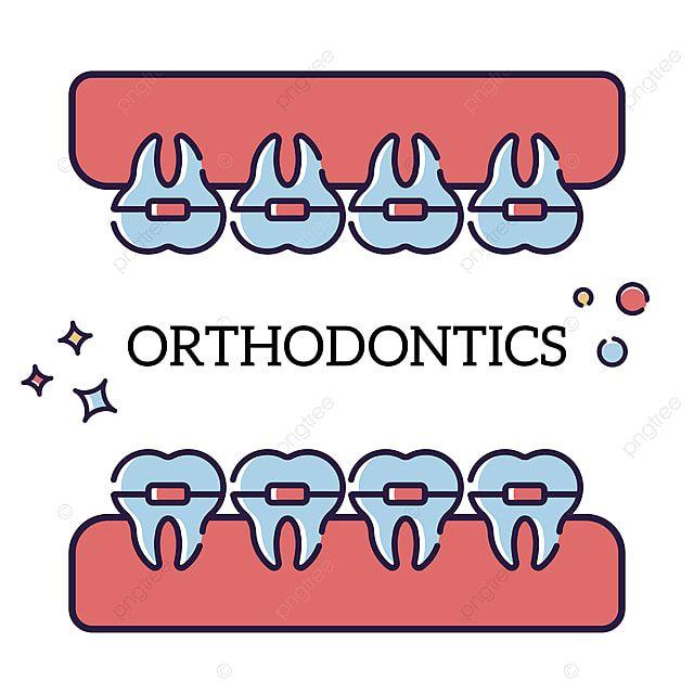 الأسنان في تقويم الأسنان الداخلي طب الأسنان المتجه سن Png والمتجهات للتحميل مجانا Orthodontics Orthodontist Teeth