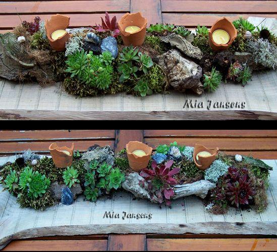 lange plank met vetplantjes