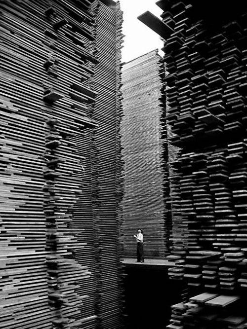 Alfred Eisenstaedt    A man standing in the lumberyard of Seattle Cedar Lumber Manufacturing. 1939