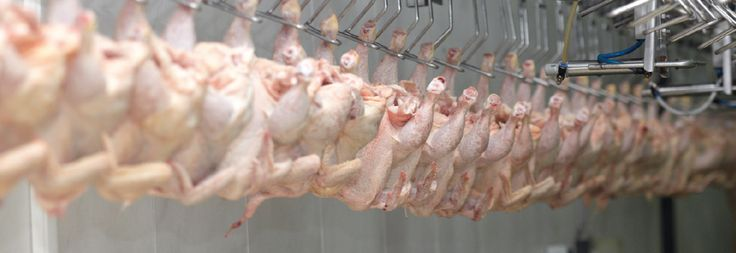 DIEQUINSA Empresa en Costa Rica dedicada a la distribución de equipos y suministros industriales para mataderos de res, pollo, cerdo, panaderías y equipo de salud y seguridad ocupacional