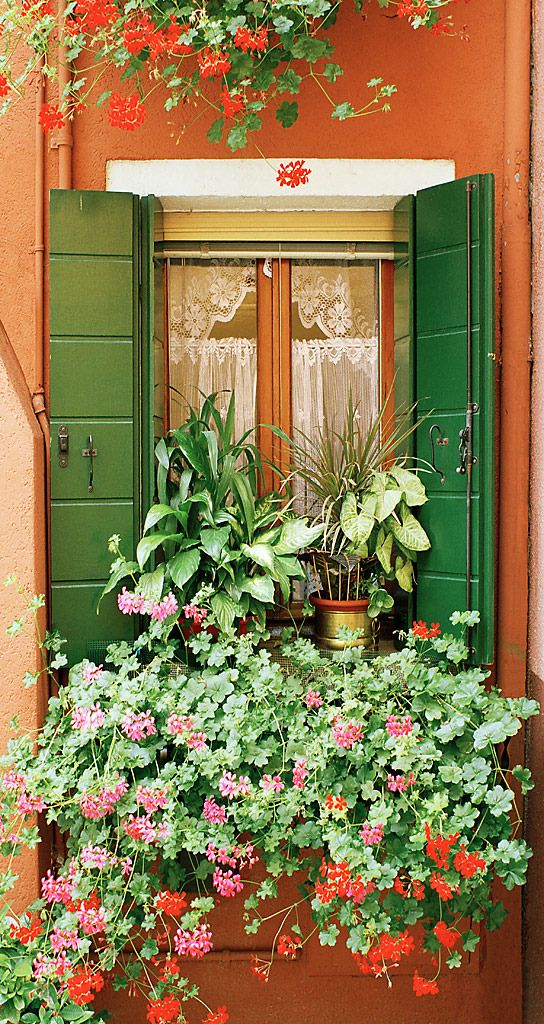 an orange wall and green-shuttered window filled with potted houseplants and pink and red geraniums