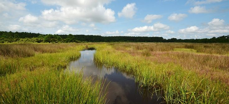 North Carolina Coastal Federation preserving riparian lands vital to coastal water quality