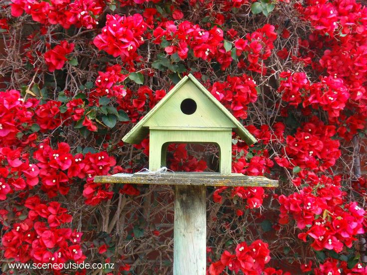 Birdhouse with Bougainvillea background.