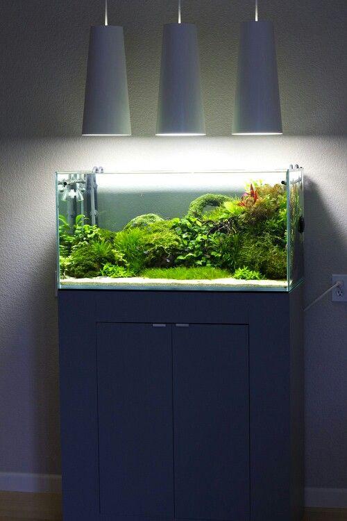 Natural fish tank. 48 Gallon. - snygg belysning!