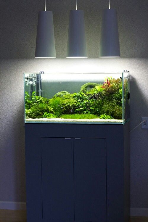 natural fish tank 48 gallon aquarium pinterest