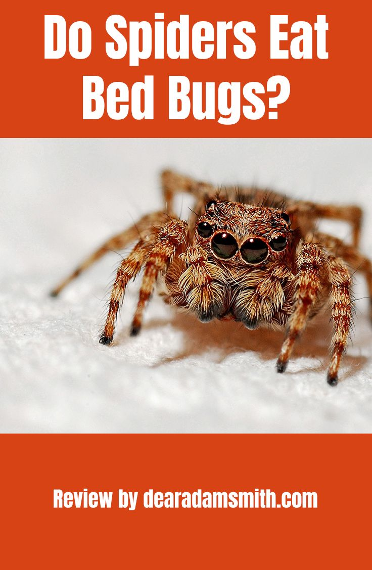 Do Spiders Eat Bed Bugs Dear Adam Smith Dear Adam Smith Spider Eating Bed Bugs Bugs