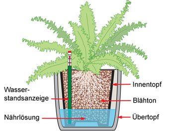 Hydrokultur und Co: Pflanzsysteme fürs Zimmer - Mein schöner Garten