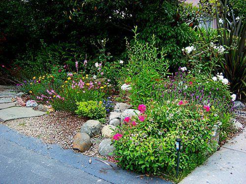 Image Result For Austin Butterfly Garden