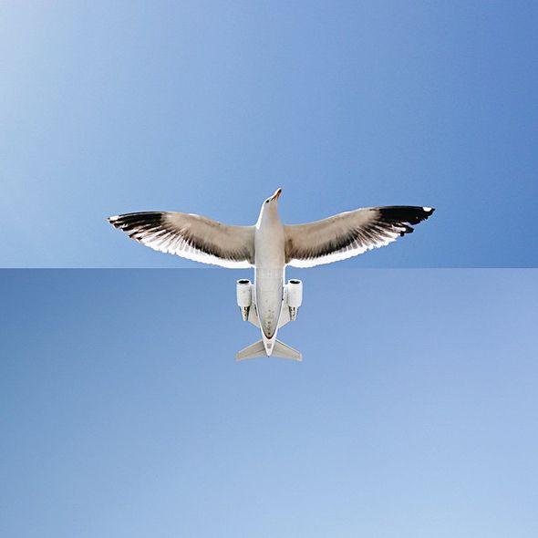 Gli spettacolari fotomontaggi di Stephen McMennamy   PICAME