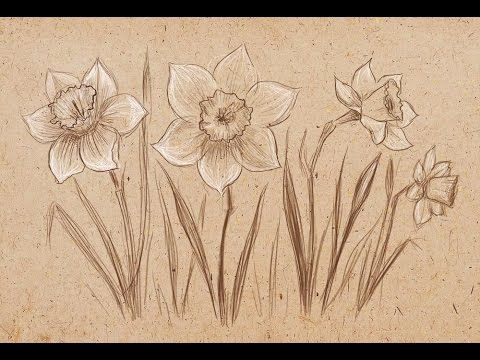 Как рисовать нарциссы карандашом поэтапно читайте здесь - http://www.artrecept.com/art/2488 Сегодня мы будем учиться рисовать прекрасные весенние цветы нарци...